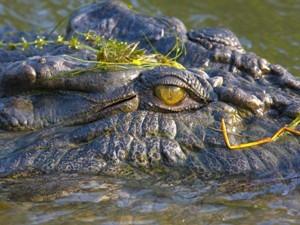Ein Krokodil - Australien mit Kindern