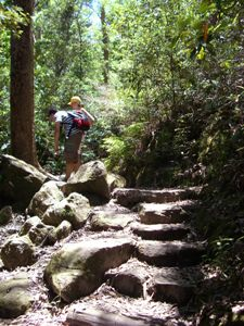 Wanderer im Lamington Nationalpark - von Sydney nach Brisbane
