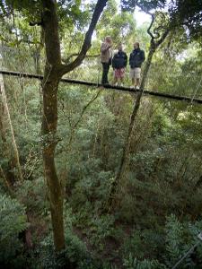 lamingtonnp-regenwald - von Sydney nach Brisbane