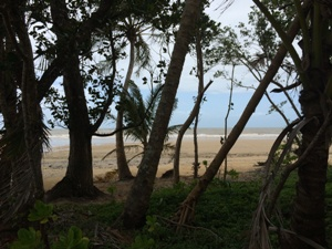 Regenwald und Strand in Mission Beach