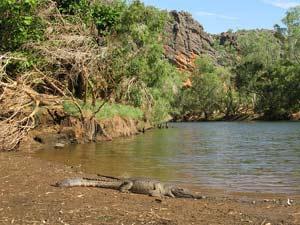 Ein Krokodil liegt am Ufer eine Flusses