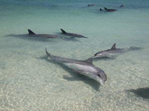 Westküste Australien Delfine Strand Monkey Mia