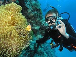 Coral Bay Westküste Australien Tauchen