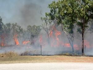 ein typisches Buschfeuer in Australien