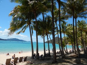 australien-osten-hamiltonisland-strandunterpalmen