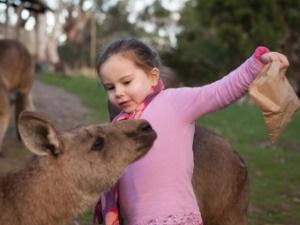 Mädchen füttert Känguru