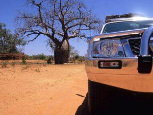 Ein Boab Tree - ein Wahrzeichen der Kimberleys