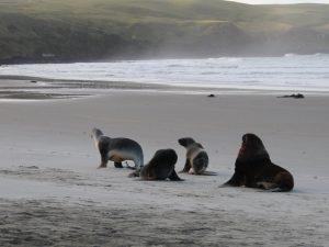 dunedin-wildlife-tour Rundreise Australien Neuseeland