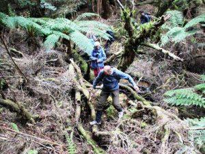 Wandern in Tasmanien im Regenwald