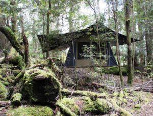 Zelt im Regenwald