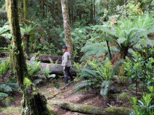 Gruppenreise Tasmanien Regenwald Rundgang Ausflug