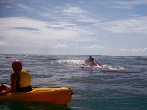 Wale bei Byron Bay