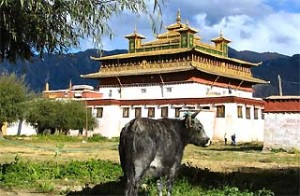 tibet china koe samye