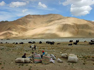 tibet everest nomaden