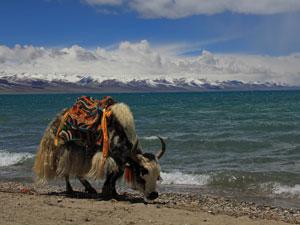 Nam Tso Tibet reizen