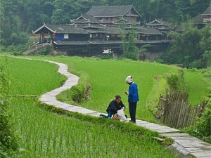 platteland china rijst