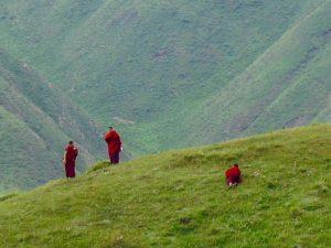 Monniken_op de grasvlakte China