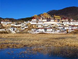 china reis zhongdian