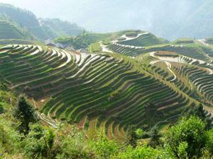 pingan rijst terrassen