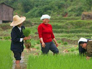 reizen china rijstvelden