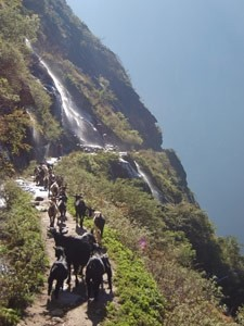 route tiger leaping gorge china