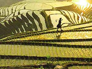 Rijstvelden Ping'an China reis