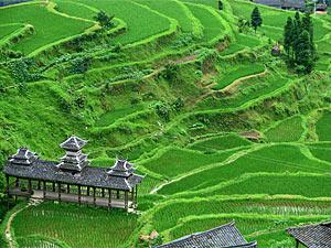 tangan dorpje rijstvelden china