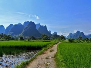 Reis China - rijstveld Yangshuo