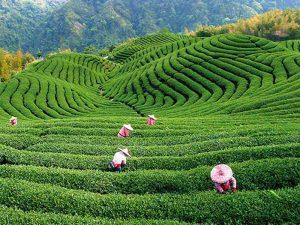 Happy Hangzhou China