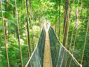 Wandeling Teresek Hill en Canopy Walkway