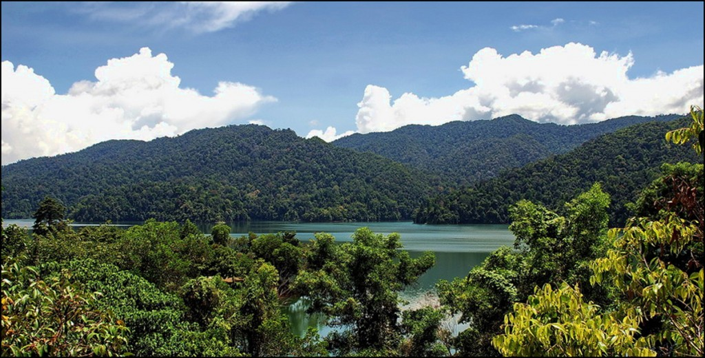 reizen Maleisië jungle
