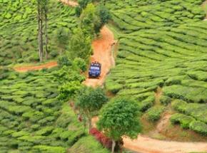 Glooiende theevelden Maleisie - Cameron Highlands