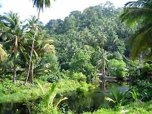 jungle tiomaneiland maleisie