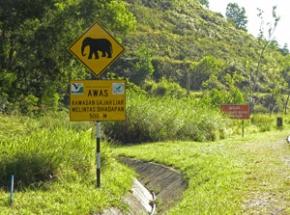 olifanten spotten maleisie