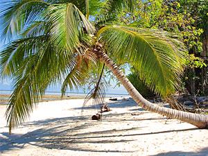 Palmboom - Borneo duiken