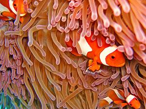 Borneo duiken Sipadan