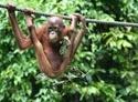 Borneo all the way