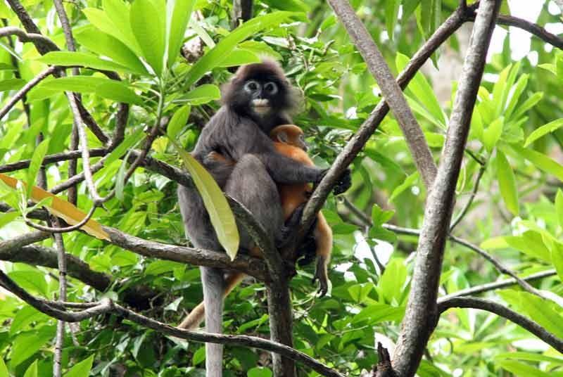 Maleisië vakantie - jungle