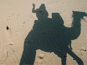 marokko schaduw kameel woestijn