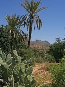 marokko palmoase aitmansour