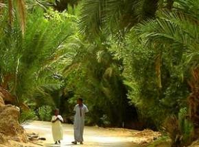 marokko palm oase