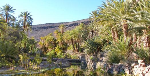 Palmoase Marokko