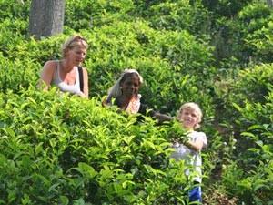 Riksja Family Sri Lanka: thee plukken