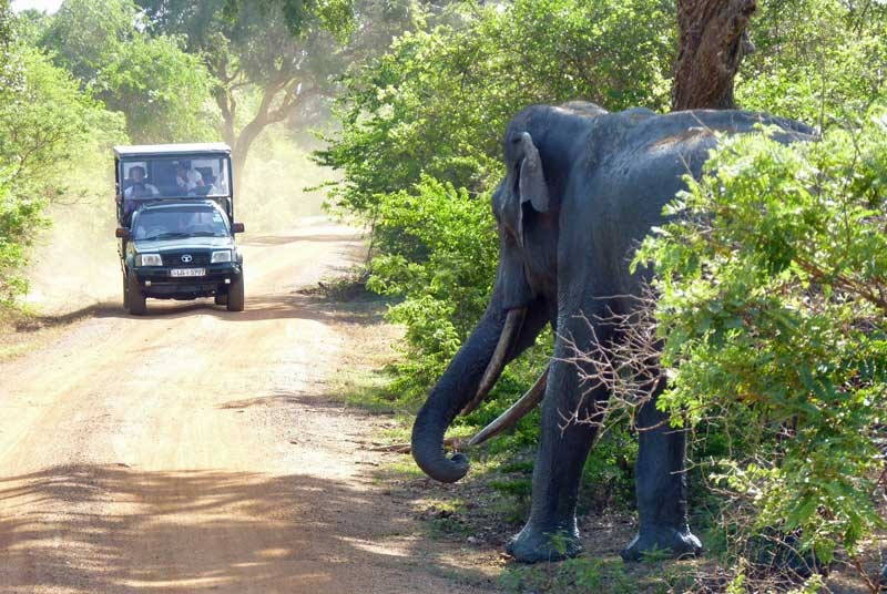 Sri Lanka met kinderen - safari