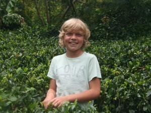 2 weken Sri Lanka met kinderen - thee plukken