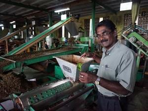 treinreis Sri Lanka met kinderen - theefabriek