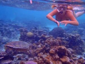 Tropisch toetje Malediven