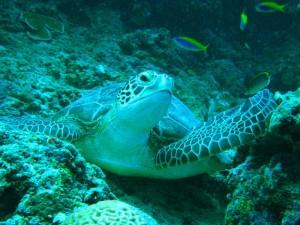 schildpad - Malediven met kinderen