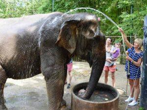 Elefanten Duschen im WFFT bei Hua Hin