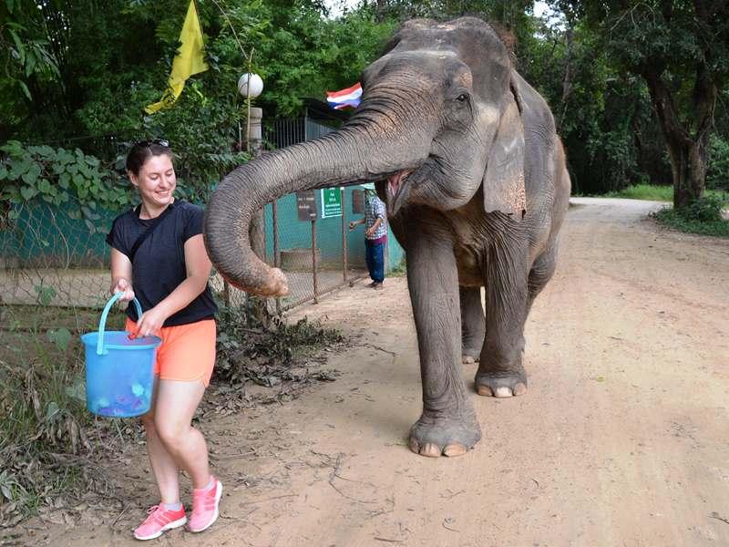 Elefanten besuchen bei Hua Hin